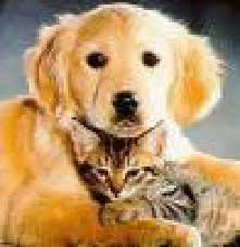 love dogs and cat